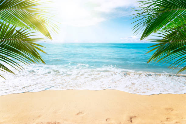 Sunny tropical beach with palm trees